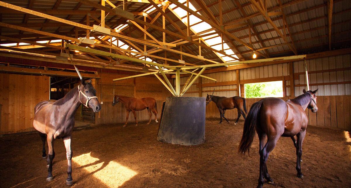 horses in ring