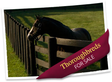 image_thoroughbreds_forsale
