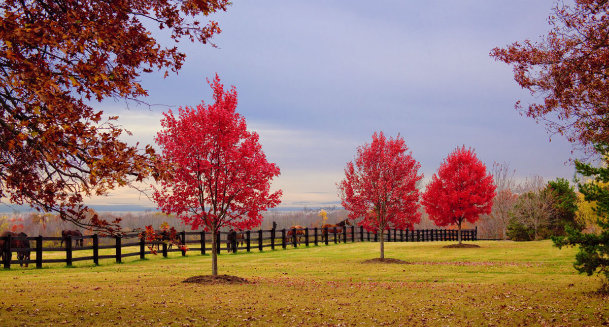horses by fence with autumnal trees