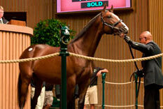 horse at auction