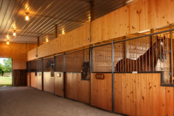 horse in stable