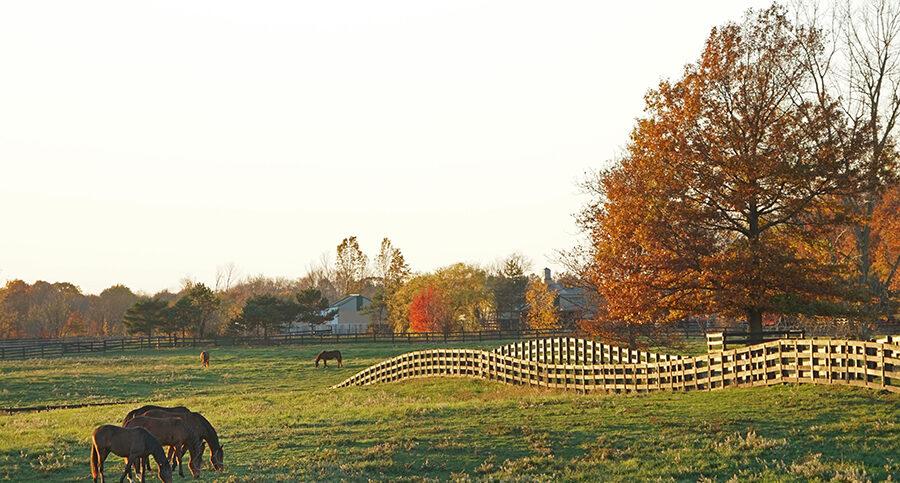 horses in the rolling fields