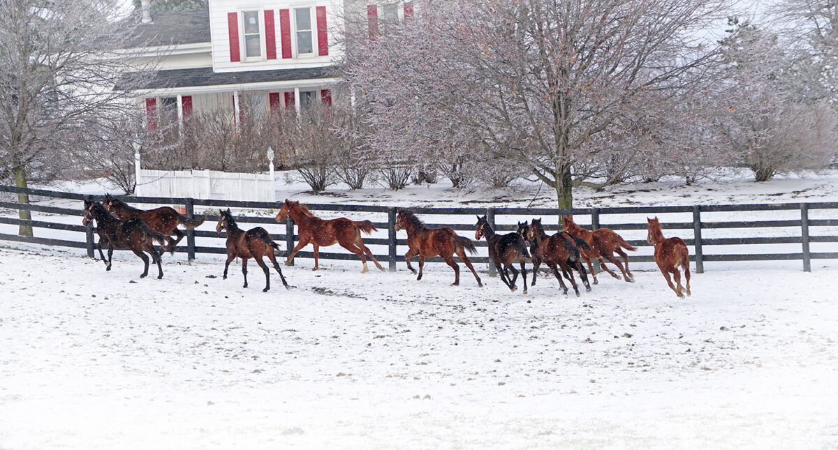 horses running in the snow