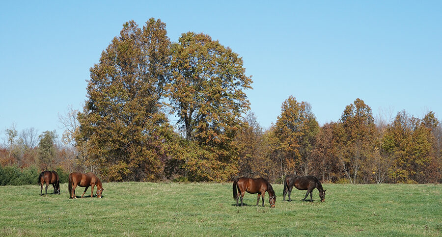 horses eating in field
