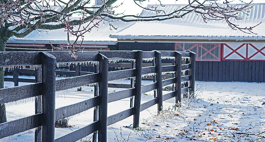 stables in the snow - thoroughbred racing horse for sale