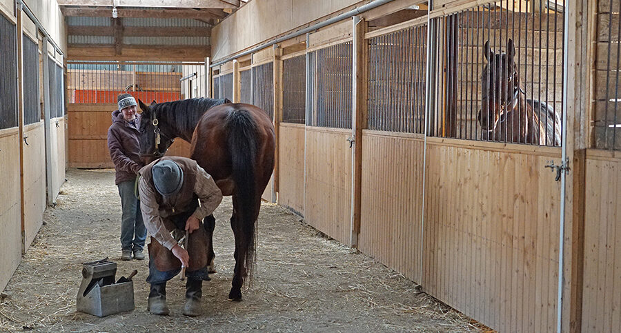 man working on the horse's hoof