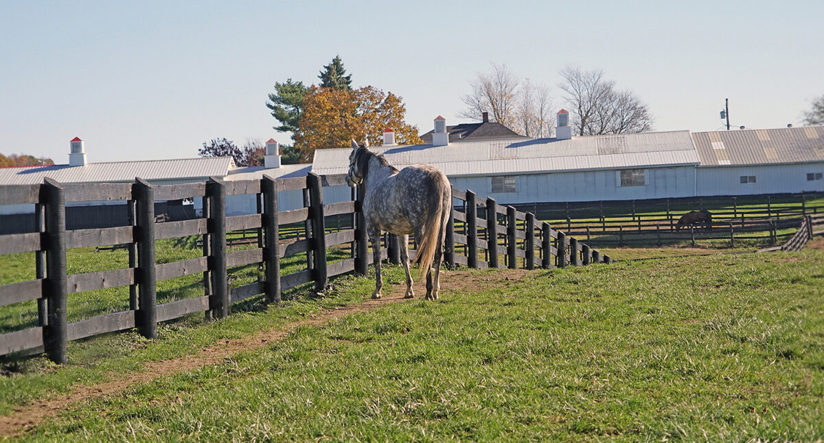horse near fence by stables