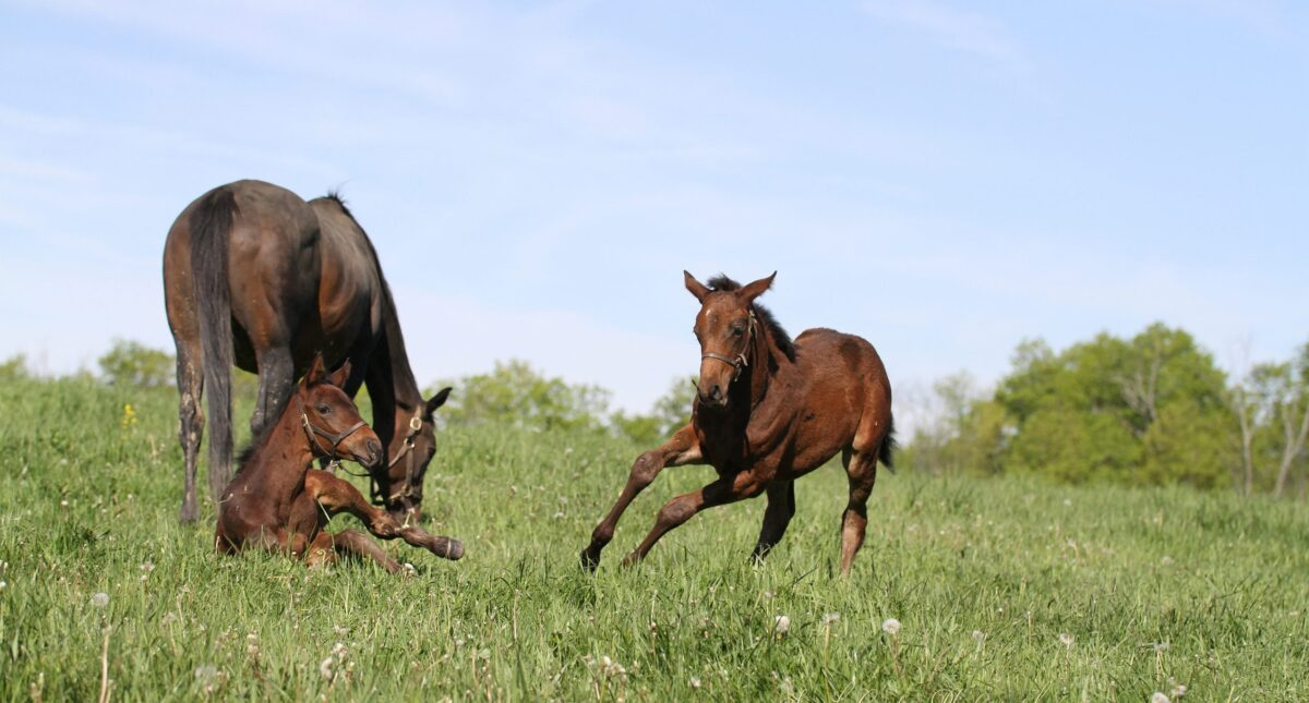 horses playing in field