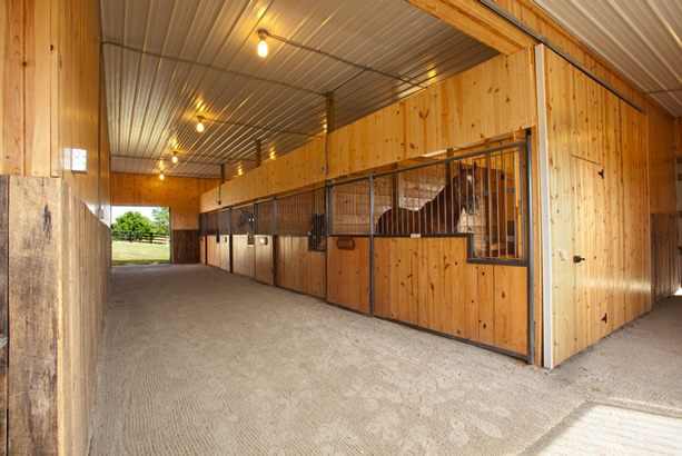 Mapleton Thoroughbred Farm stable with stallions
