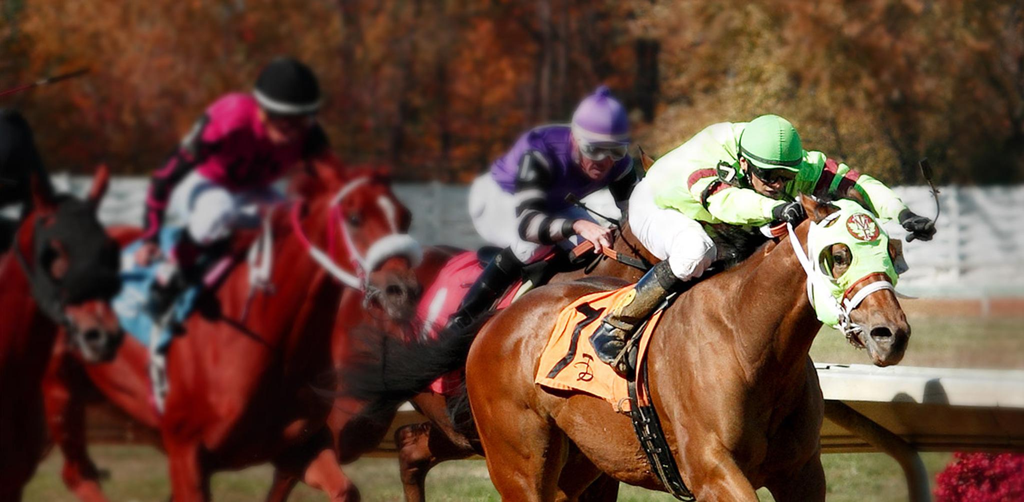 Mapleton Thoroughbred Farm horses racing
